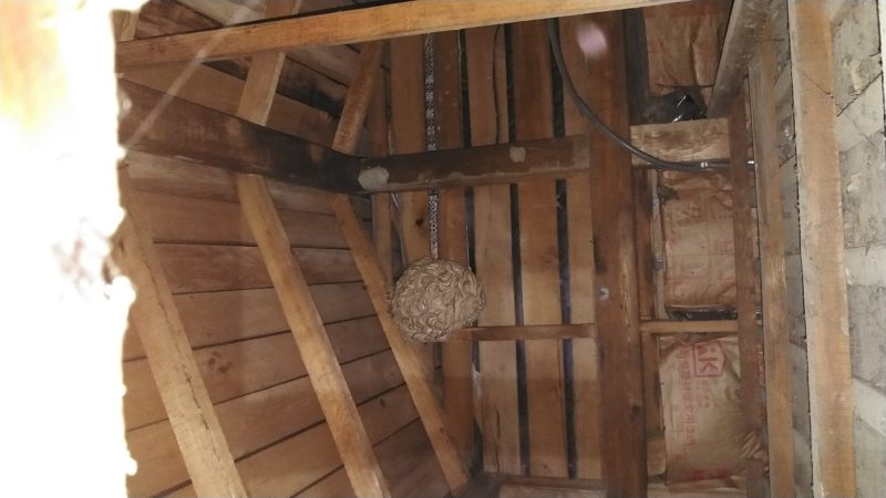 屋根裏スズメバチ駆除